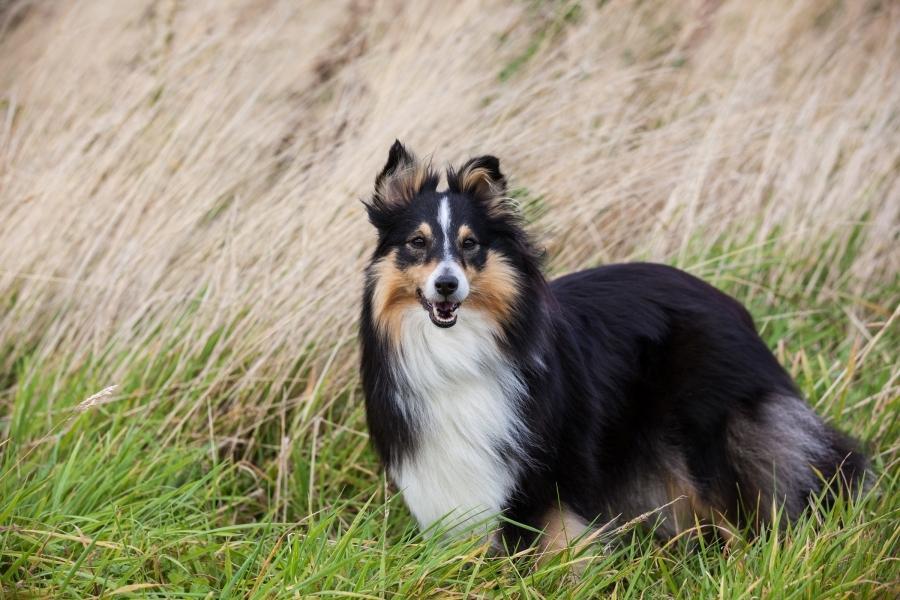 Pet photograph