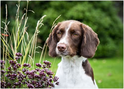 A lovely photo of a happy an inquisitive dog from our portfolio